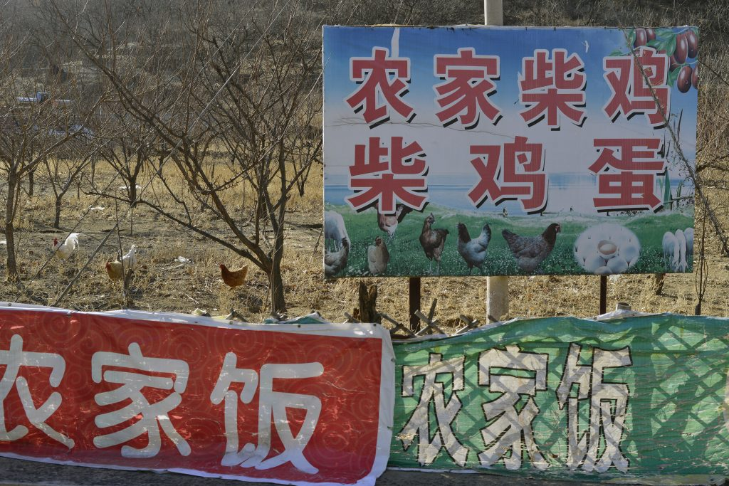 'Free-range Domestic Chickens and Eggs for Sale', Beijing, 2013. Photograph by Lois Conner.